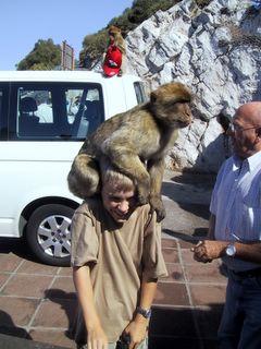 Samu ja apina