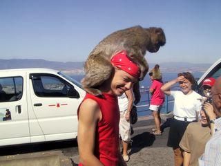 Tuomas ja apina