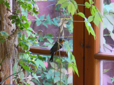 Punarinta verannalla