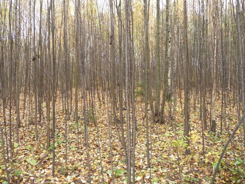 Syksyistä metsää Vuosaaren kartanon vieressä